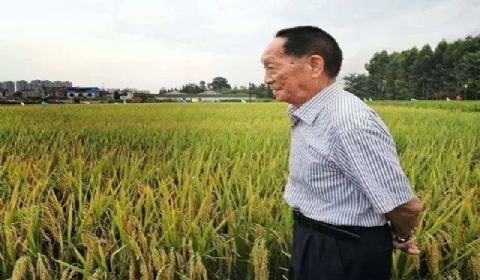 """""""杂交水稻之父""""袁隆平宣布新成果:水稻亲本去镉技术获突破"""
